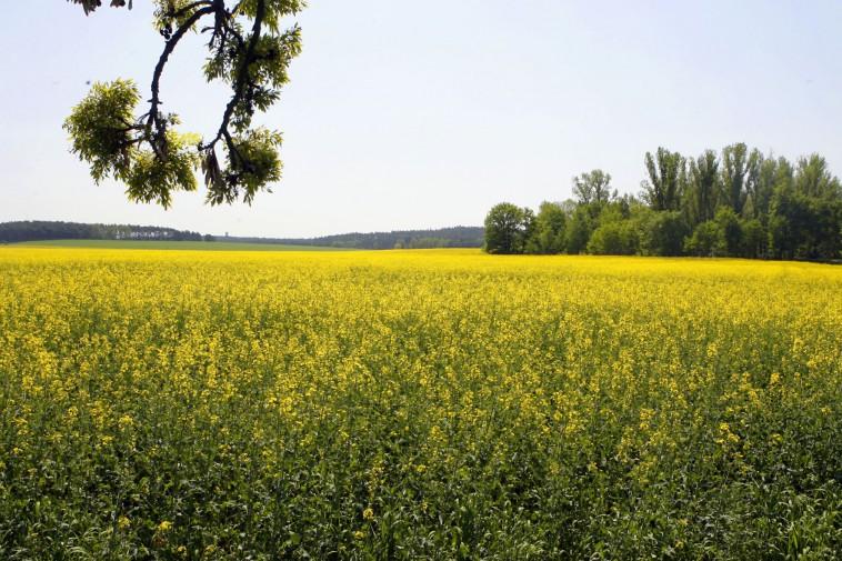 Biokraftstoff Mehr Klimaschutz